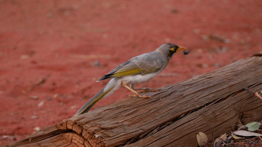 cr-oiseau-mange