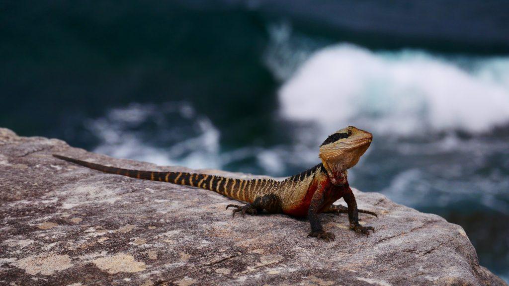 Un dragon d'eau