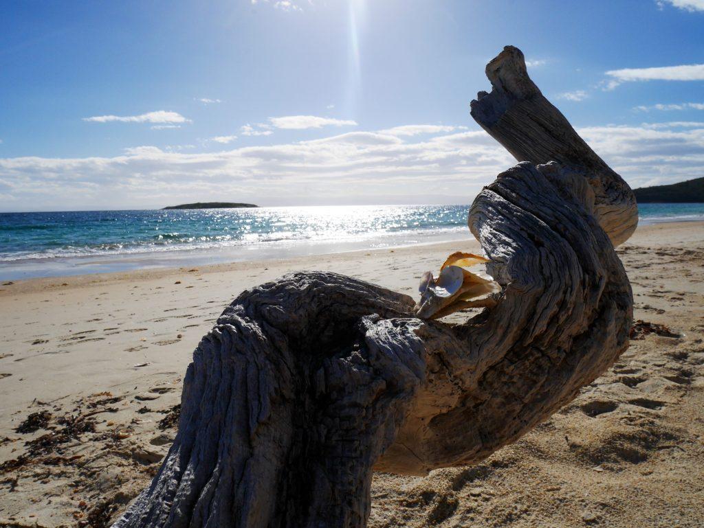 Un coquillage sur Hazards Beach