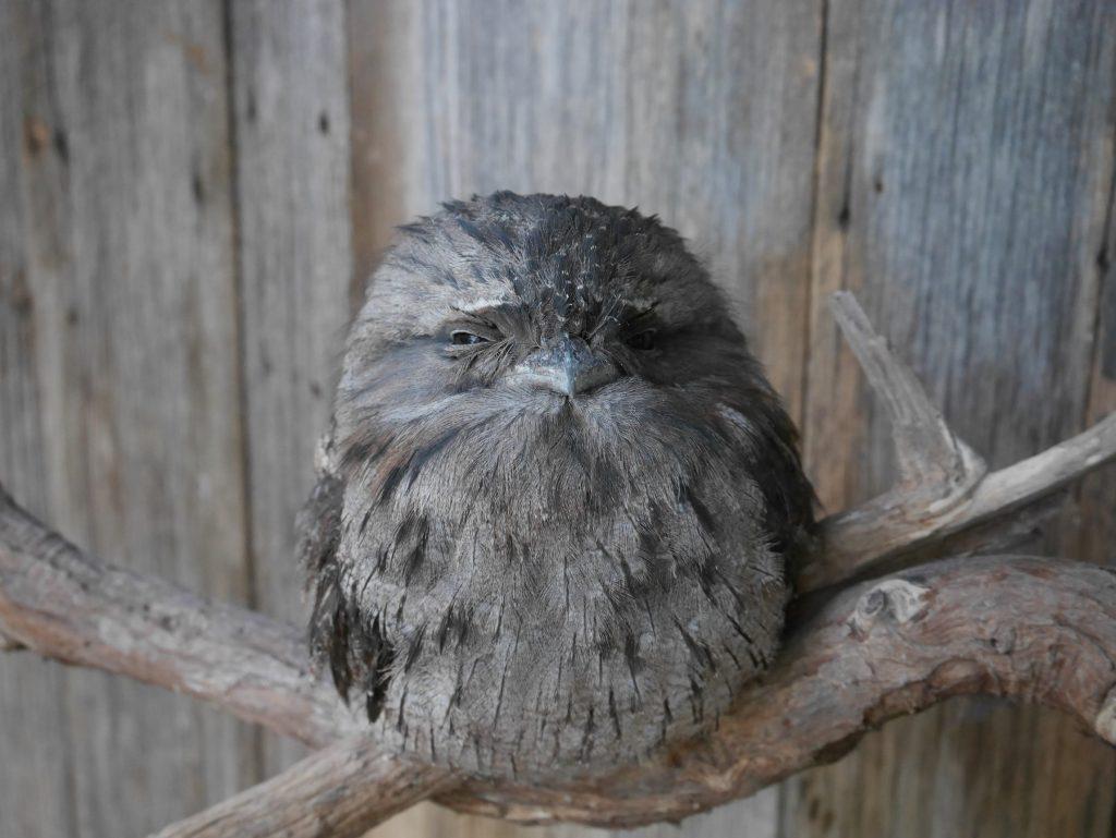 Qui veut jouer à Angry Bird ?