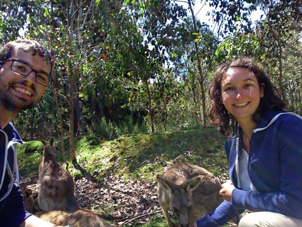 Selfie avec des kangourous, un grand classique !