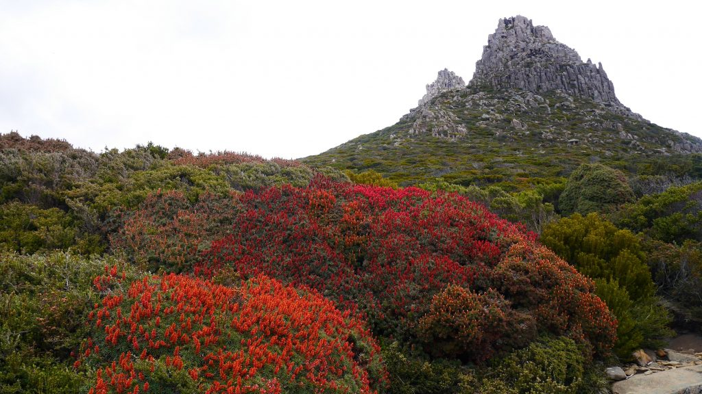 Sur la route vers le Mont Ossa
