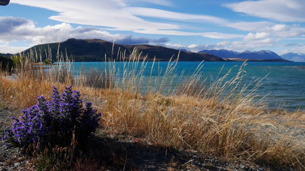Toujours le lac Tekapo