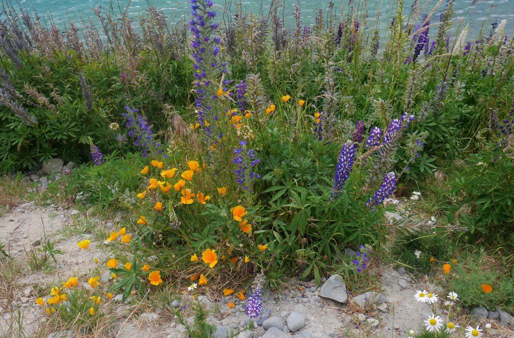 Des fleurs des champs