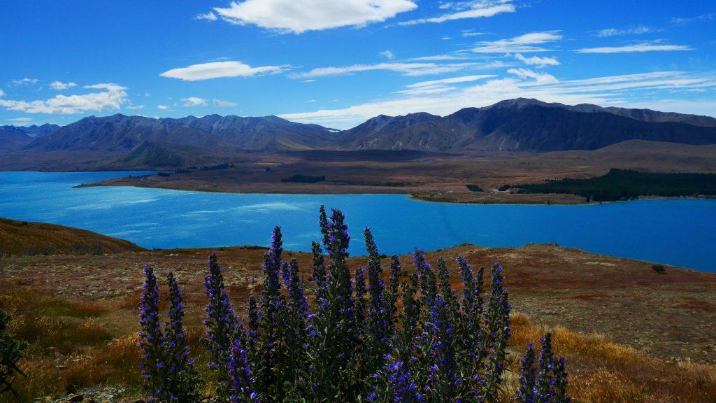 Le lac Tekapo depuis le Mont John