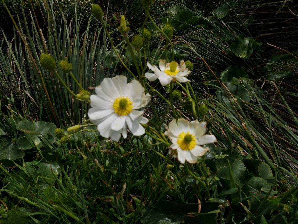 Fleurs blanches sur la route