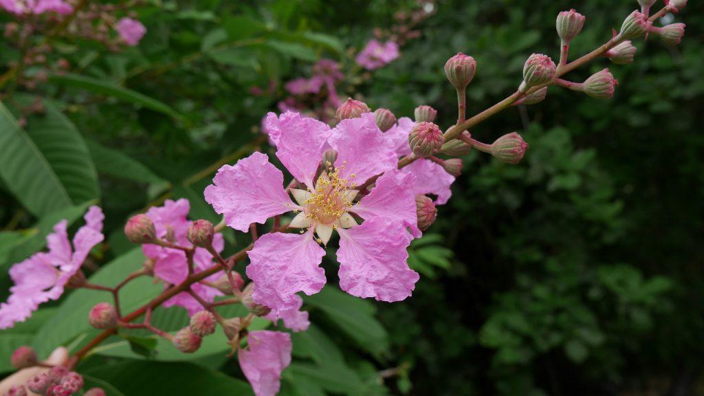 grande-terre-j4-fleur