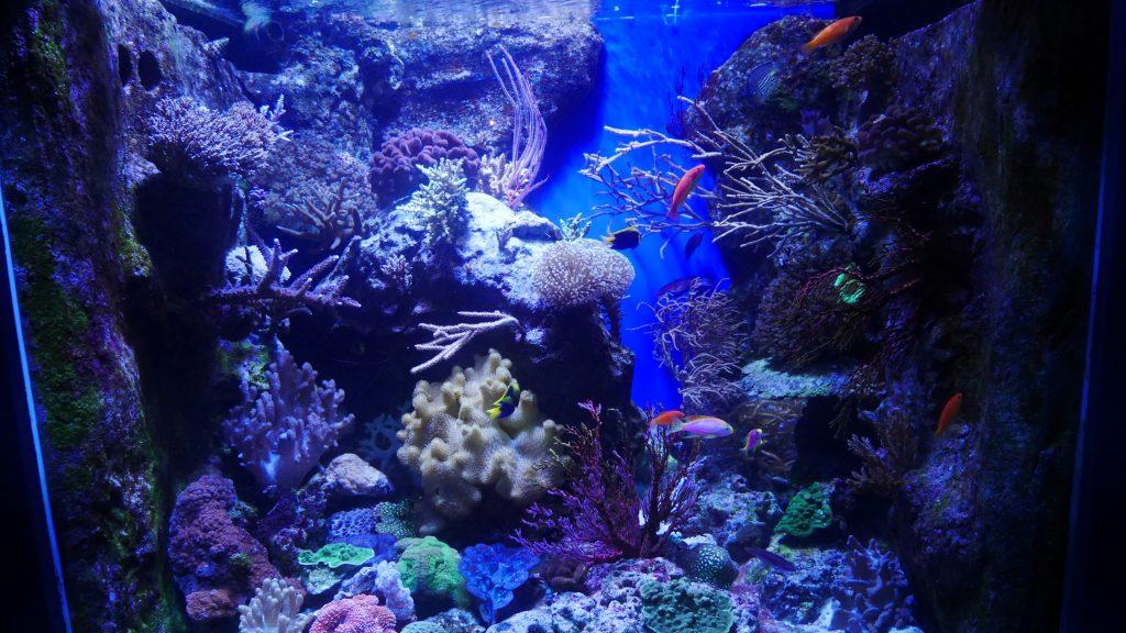 Quelques poissons à l'aquarium