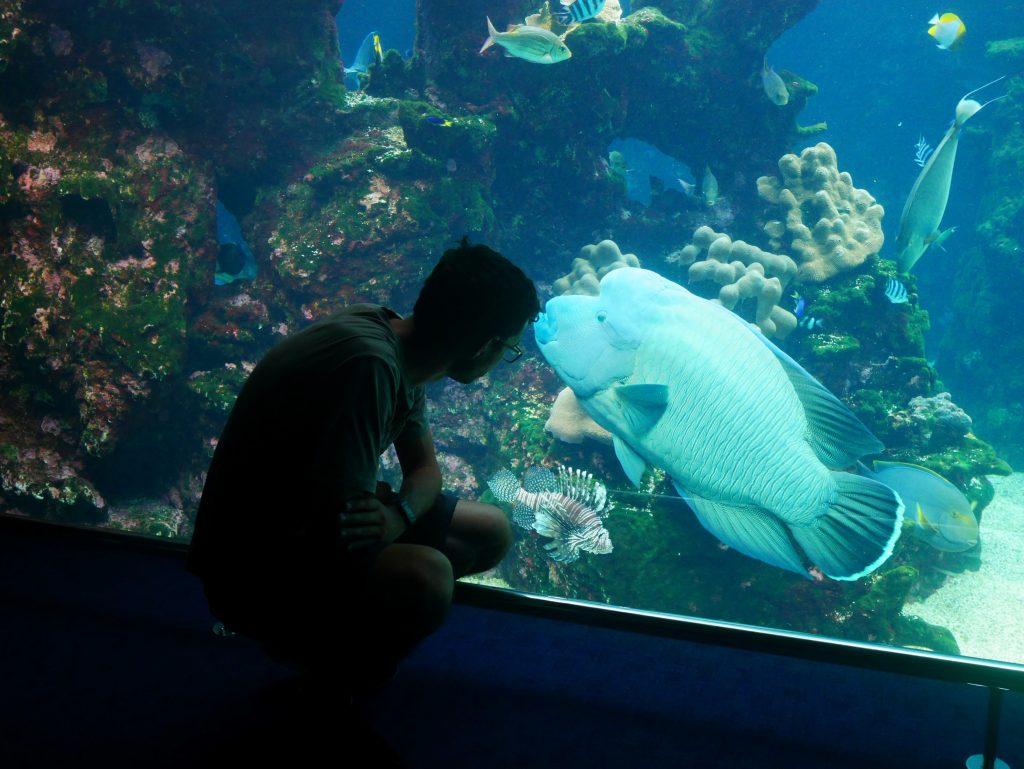 Un très gros poisson à l'aquarium