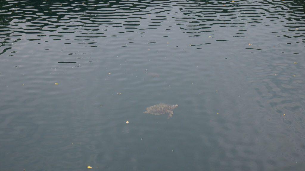Une tortue dans le trou du même nom
