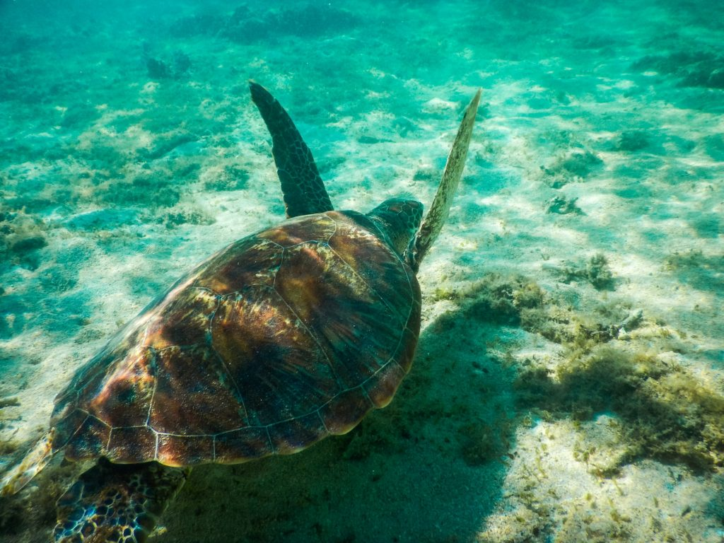 Une tortue sous l'eau