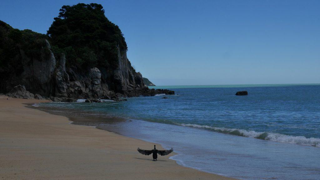 Un cormoran sèche sur la plage