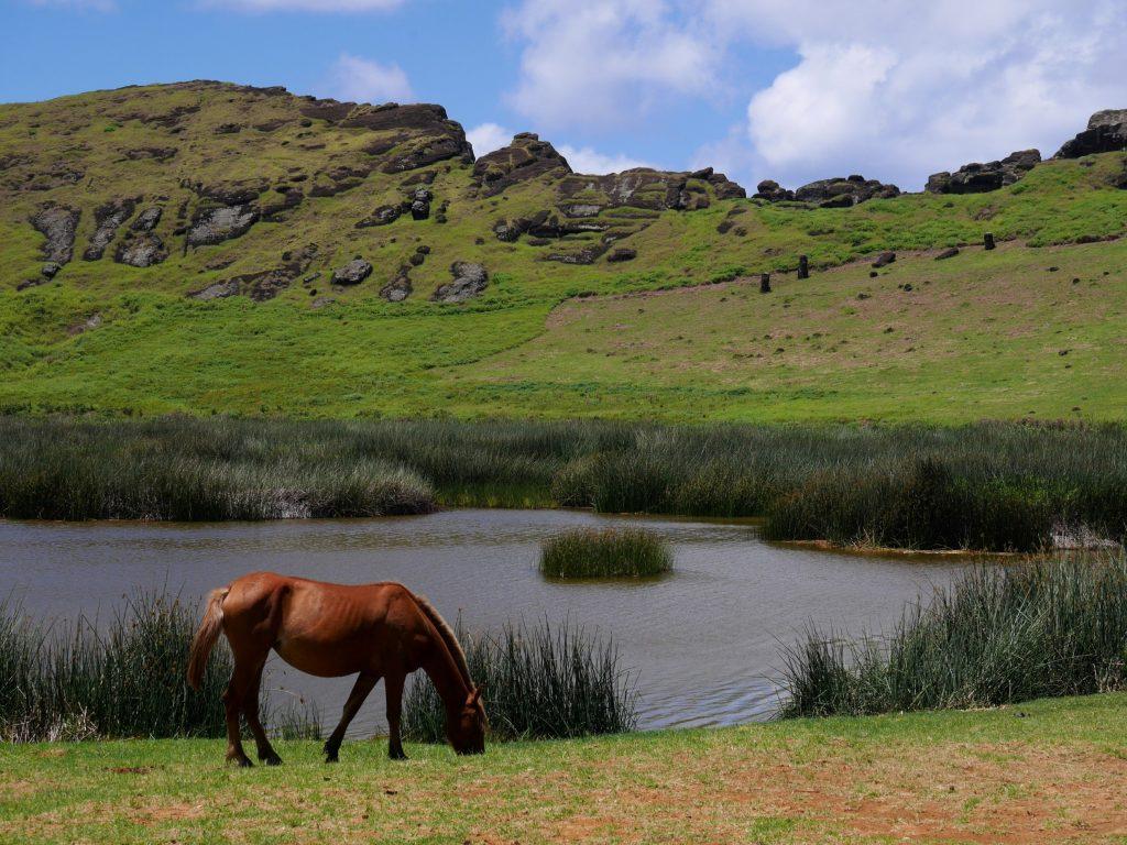 Cheval et Moai, un condensé d'île de Pâques