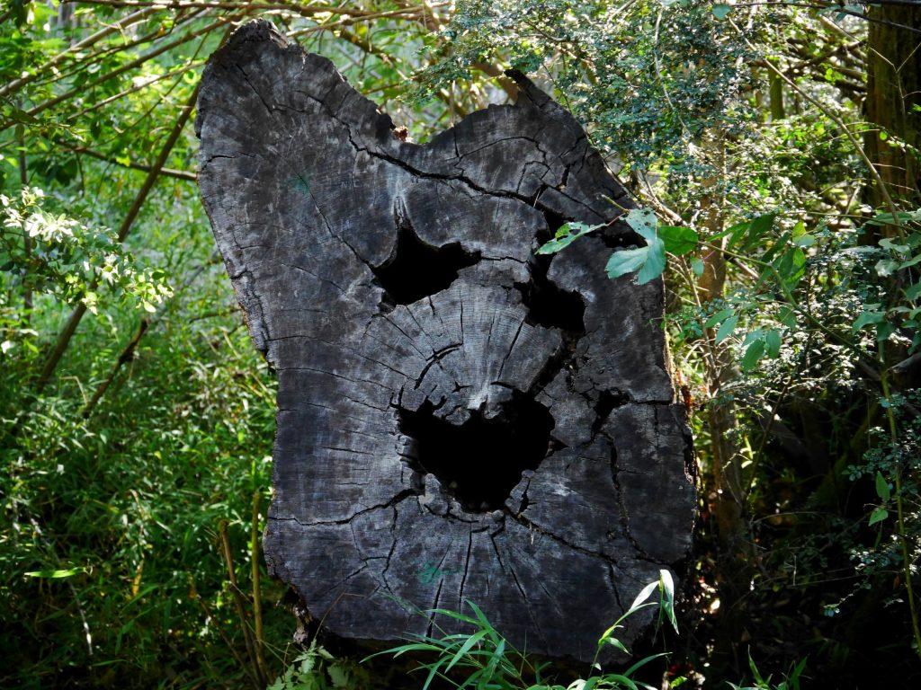 Un tronc d'arbre farceur