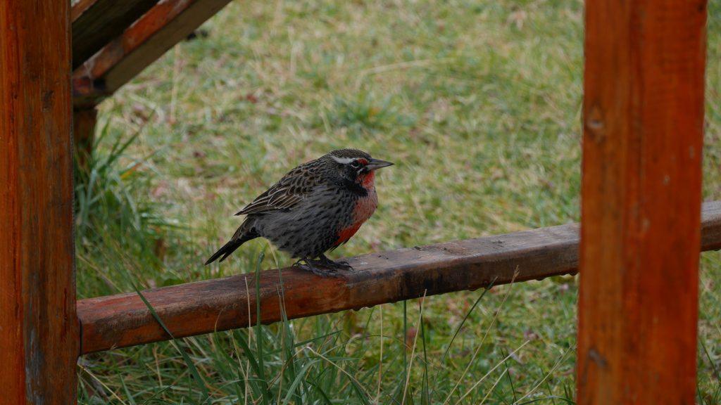 Un oiseau coloré