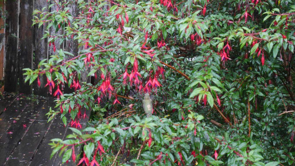 Un colibri (cherchez bien !)