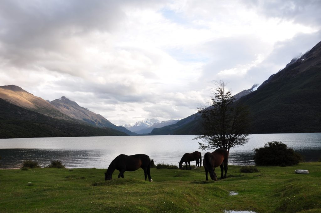 Les chevaux des gendarmes
