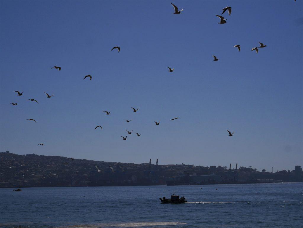 Mouette et Valparaiso au loin