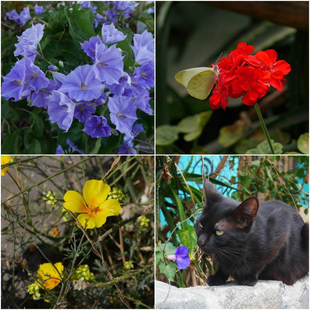 Fleurs et animaux