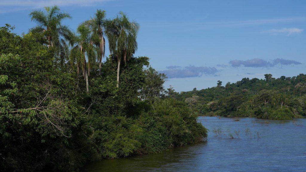 Des airs d'Amazonie