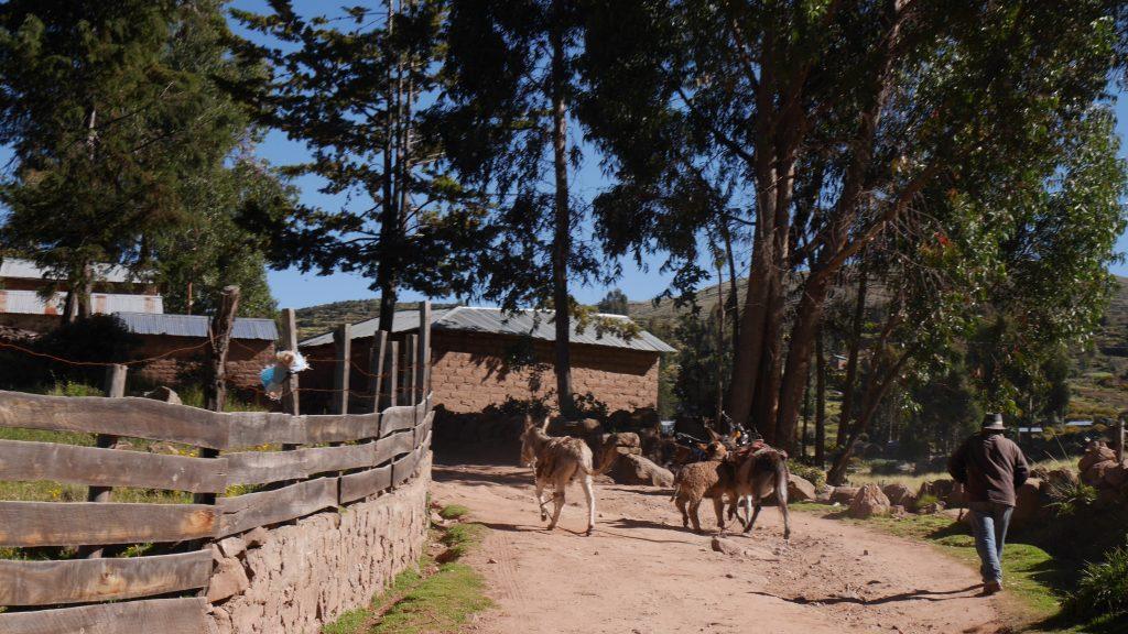 titicaca-jour-4-1