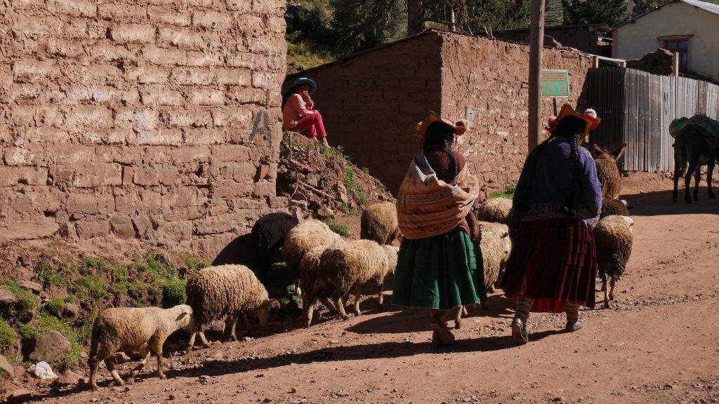 titicaca-jour-4-4