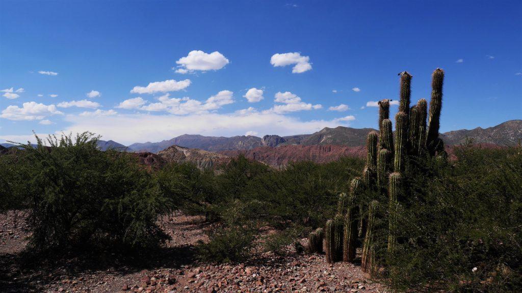 Un des beaux cactus