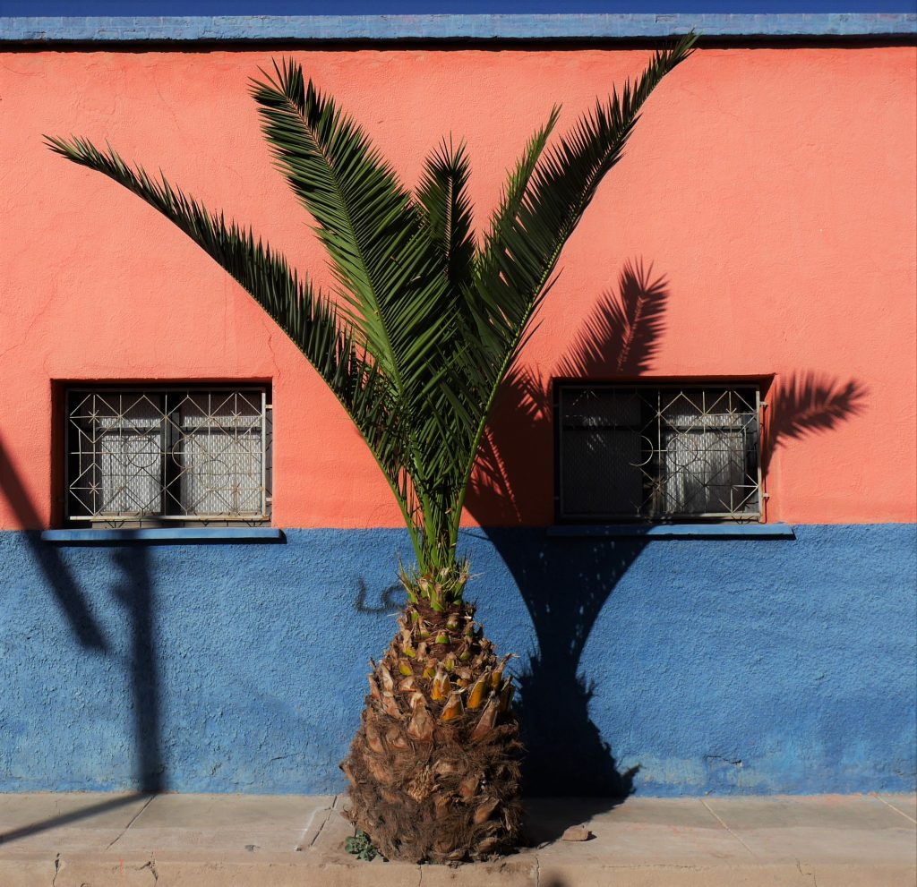 Palmier et ombre