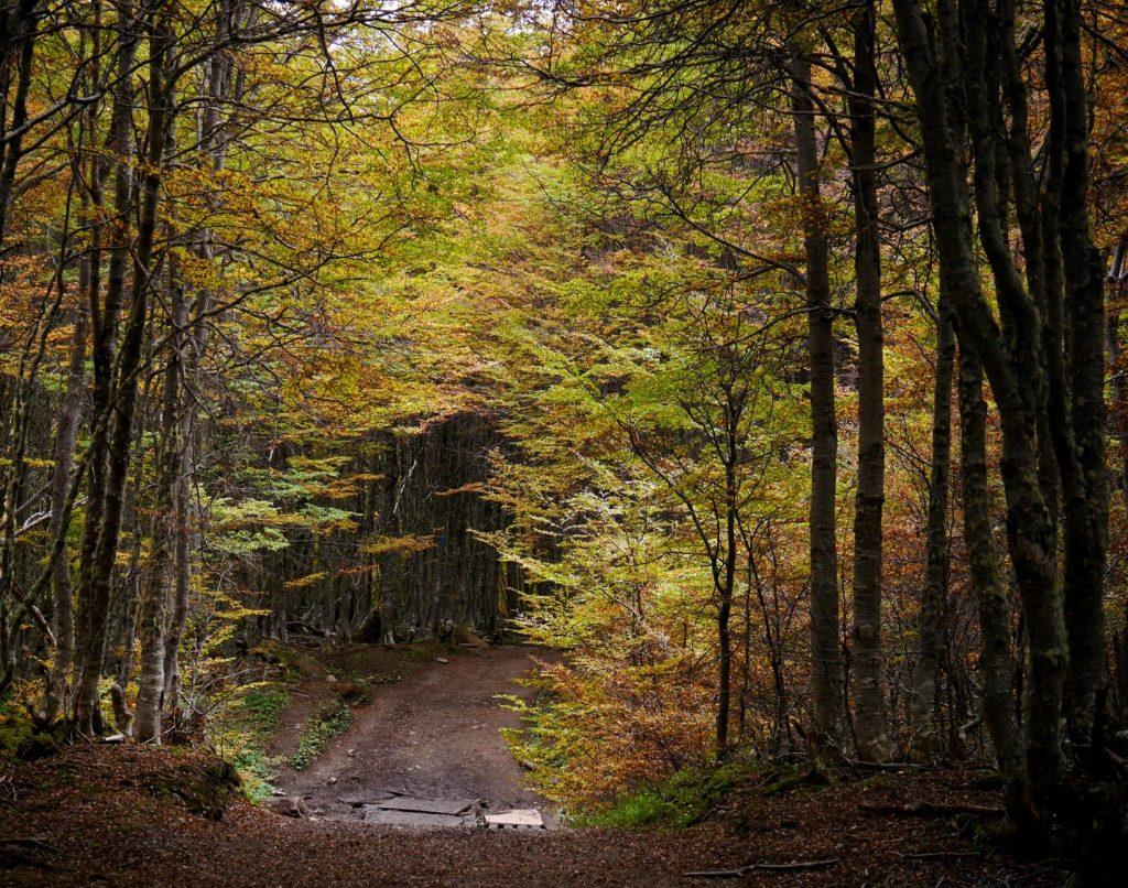 La forêt s'ouvre à nous