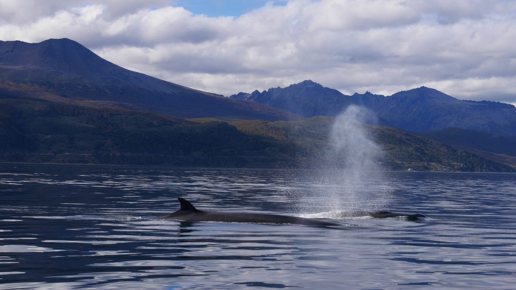 ushuaia-j3-baleines-2