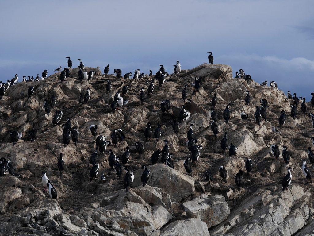 L'île des cormorans