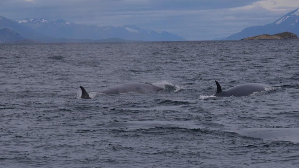 ushuaia-j3-deux-baleines-2