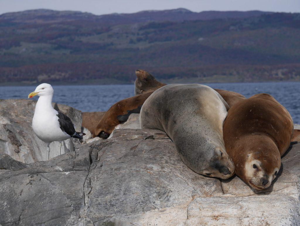 Phoques et albatros