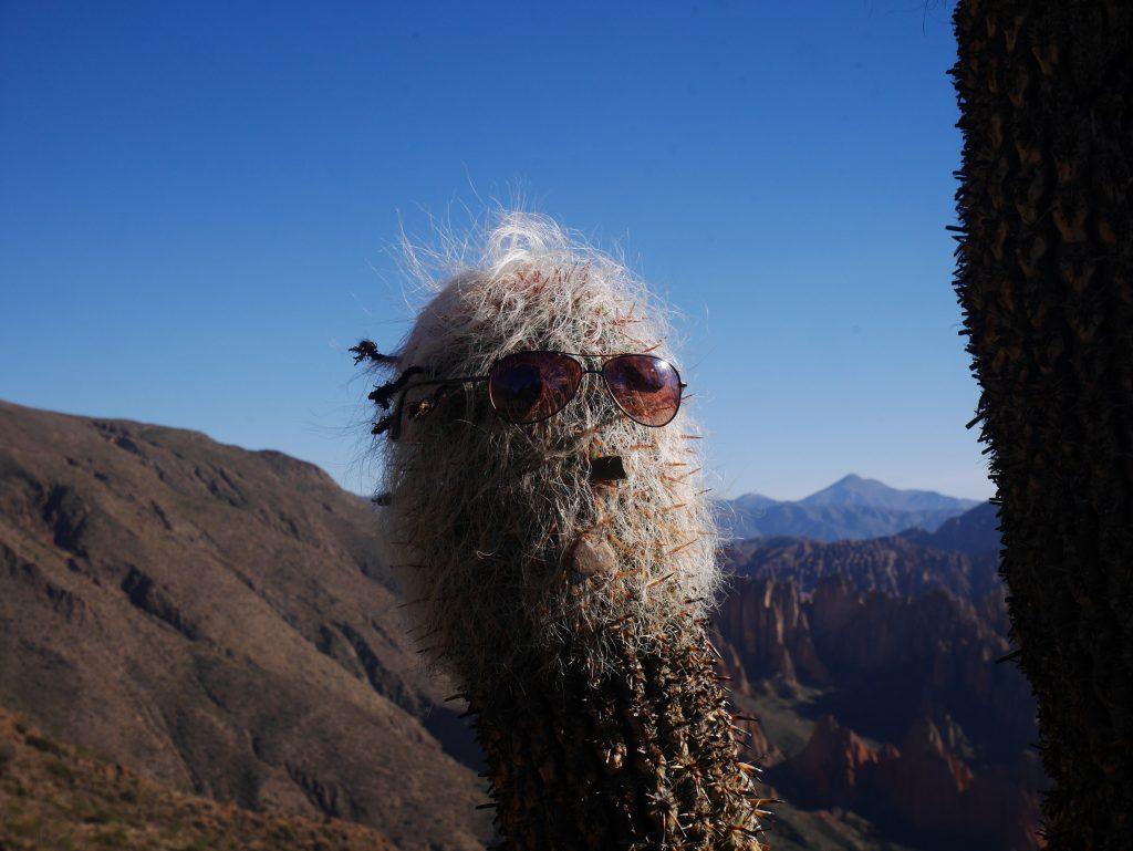 Cactus à lunettes