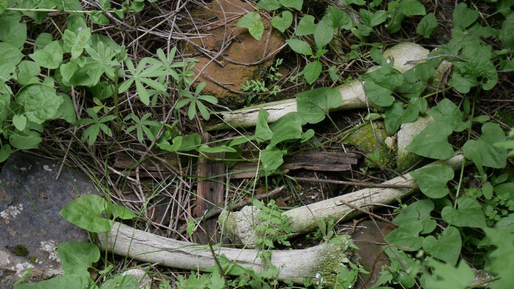 Les os du cimetière