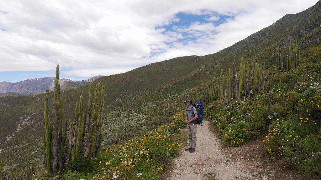 Thomas au milieu des grands cactus