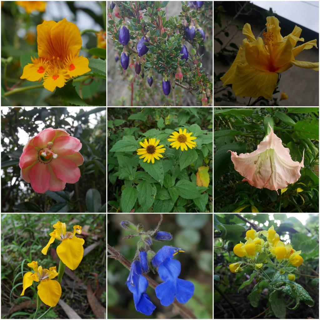 Les fleurs du chemin